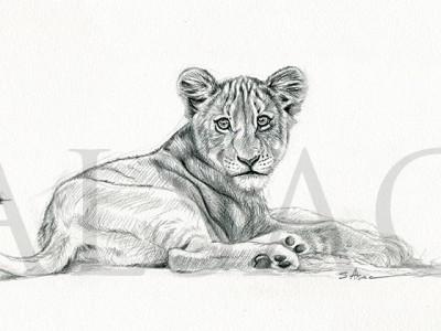 lionceau-dessinl
