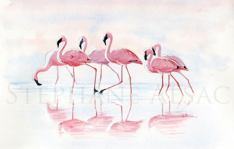 nakuru-flamingos-aquarelle-flamands