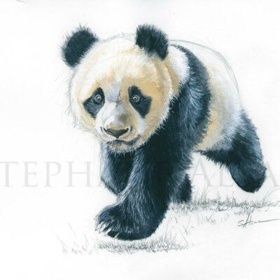 painting-watercolor-baby-panda-illustration