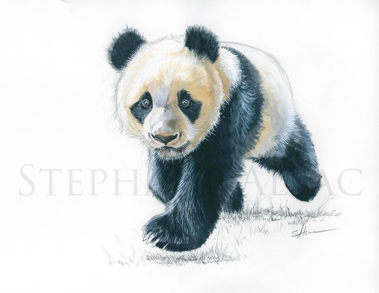 P Tit Panda Dessin Aquarelle D Un Bebe Panda Par Stephane Alsac