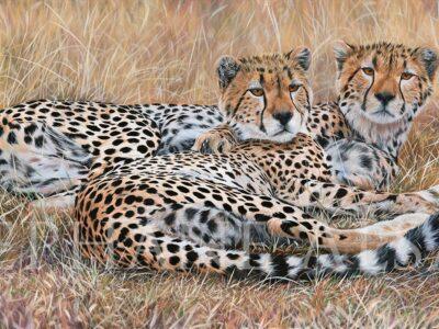 peinture-guepards-derniers-freres-grand-tableau-animalier