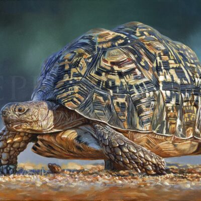 hyper-realistic-painting-leopard-tortoise-Scarab-dung-beetle