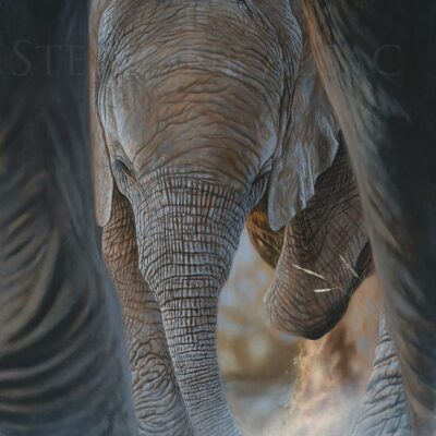 painting-baby-elephant-canvas