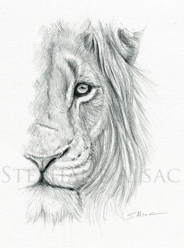 Quot Portrait De Lion Quot Dessin Original De St 233 Phane Alsac