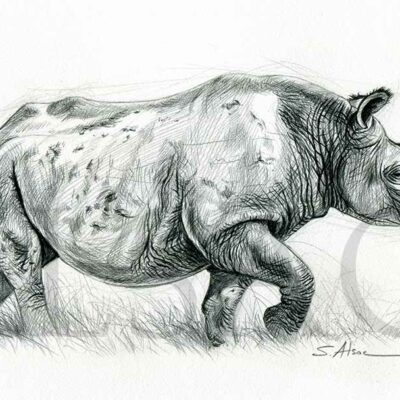 rhino-noir-dessin-illustration-crayon