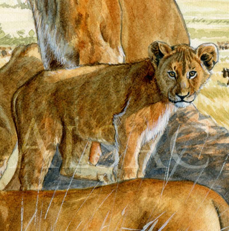 serengit-aquarelle-lionceau-serengheti-detail3