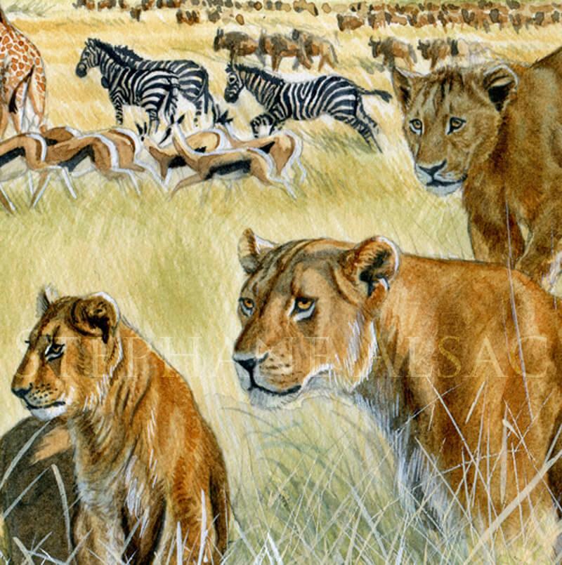 serengit-aquarelle-lionne-serengheti-detail1