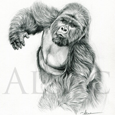 sketch-illustration-gorilla-silverback-drawing-black-white