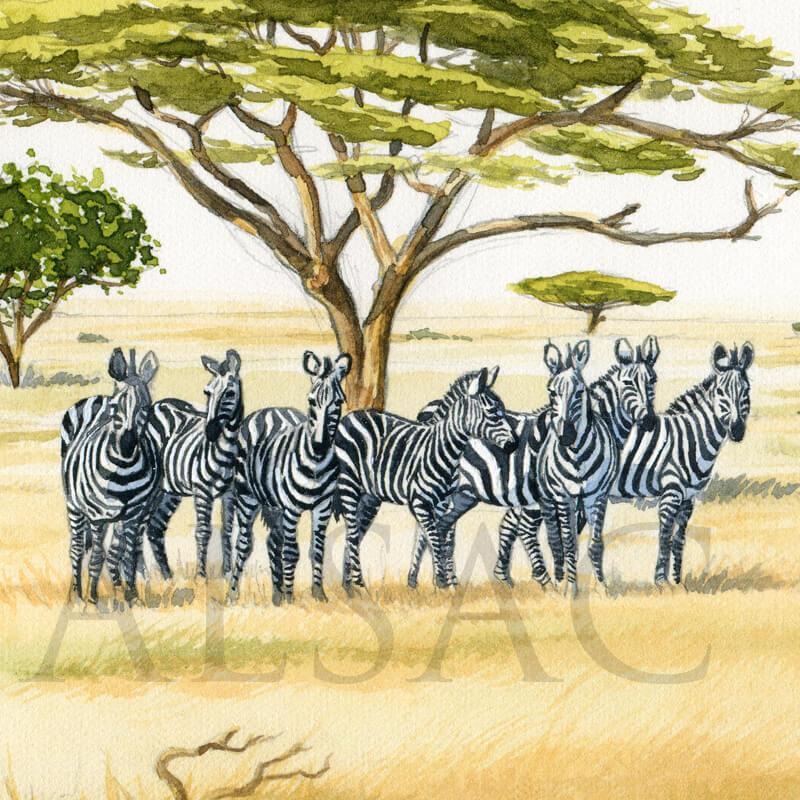 solitary-man-peinture-zebre-lion-detail1