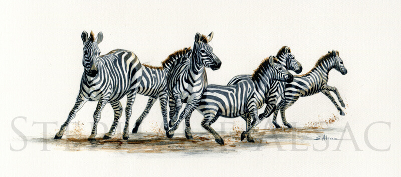 striped-rush-aquarelle-zebre