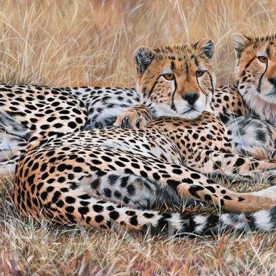 painting-wildlife-art-cheetahs-hyper-realistic