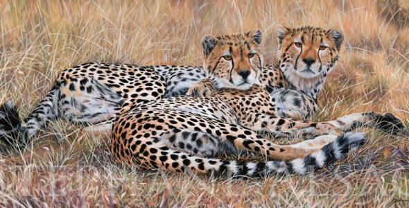 tableau-art-animalier-guepard-hyper-realiste