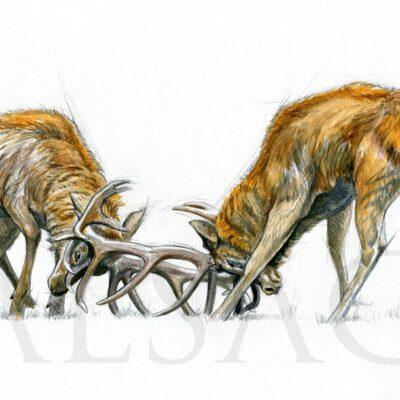 tableau-combat-cerfs-gravure-art