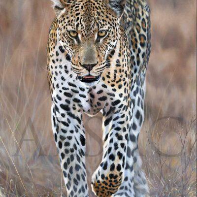 tableau-peinture-art-animal-leopard-stephane-alsac