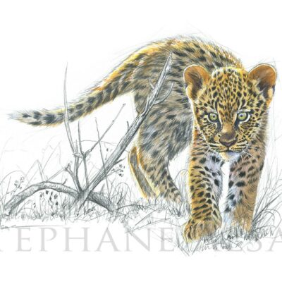 painting-baby-leopard-watercolour-art-animals