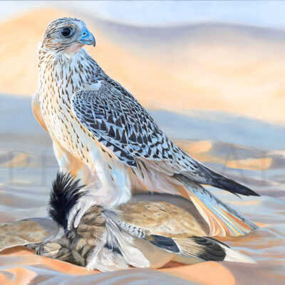 painting-gyrfalcon-houbara-hunting-desert