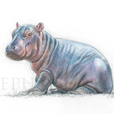 painting-savanah-small-animals-hippo