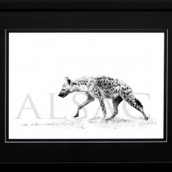 wildlife-photo-B&W-hyena-africa